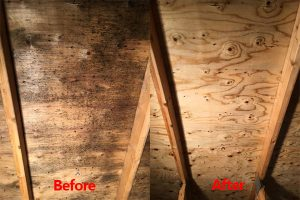 attic mold removal services in London, Ontario