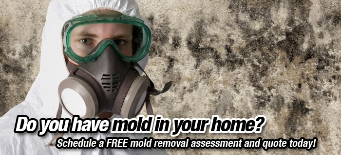 St-Thomas Ontario Mold Removal Services