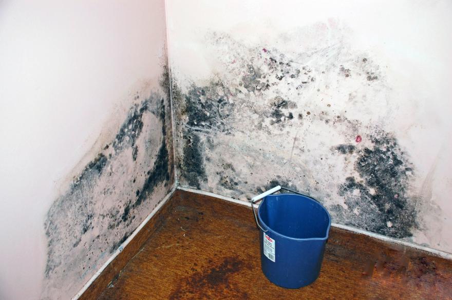 level 2 mold contamination London Ontario