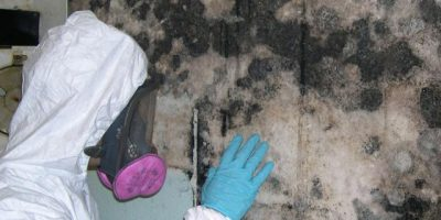 How To Interpret Lab Results From Mold Sampling