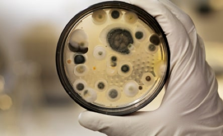 20 Interesting Things About Mold